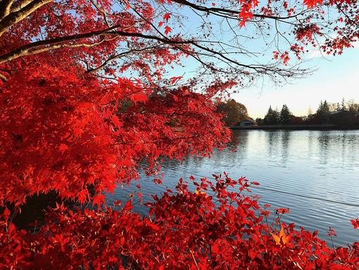 From Hokkaido to Kyushu - Where to See Autumn Leaves
