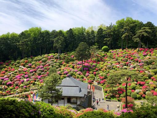 May Flowers in Japan and Where to See Them