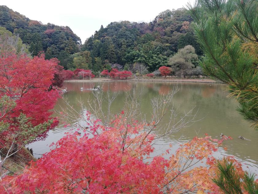 Iwaki City in Fukushima - An Onsen Town with a Tropical Feel