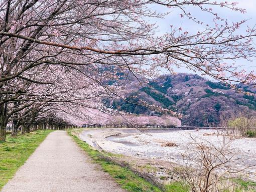 Hidden Sakura Spots in Tokyo
