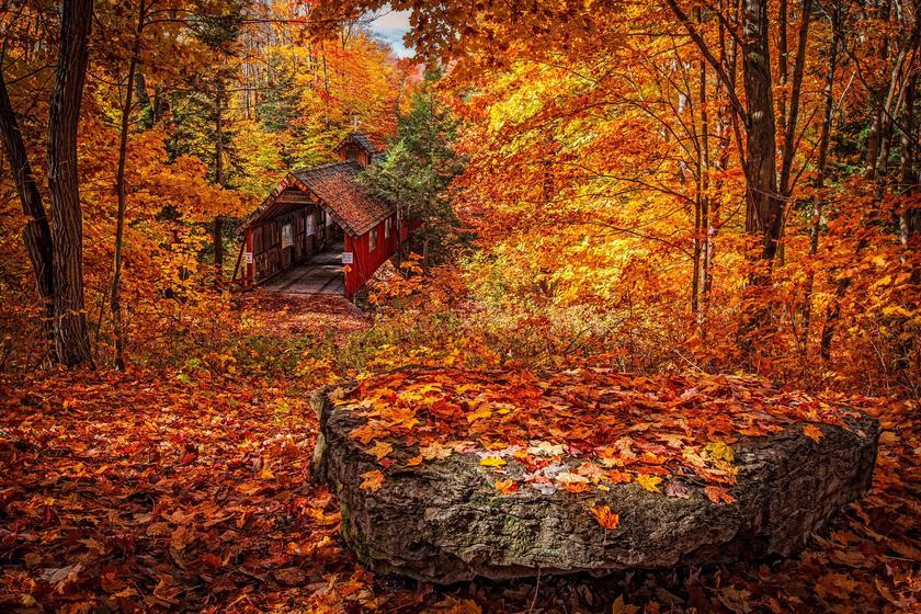 From Hokkaido to Kyushu - Where to See Autumn Leaves
