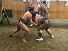 Get the real thrill of Sumo during a morning practice!